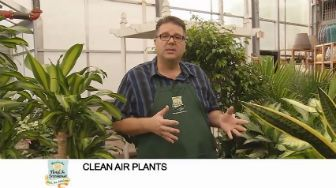 Video on plants for cleaner air from Waukesha Floral