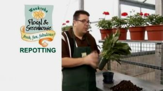 video on how to repotting plants