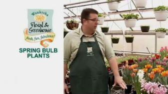 Spring bulb plant video