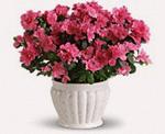housewarming flower arrangement