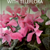 order flowers from Teleflora