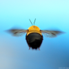 Join the Million Pollinator Project!