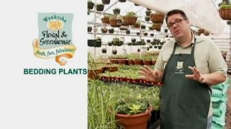 video on bedding plants from Waukesha Floral