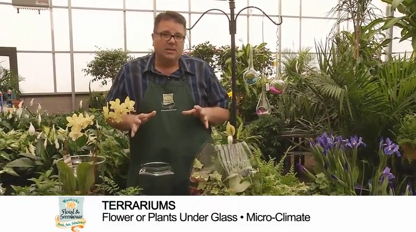 button to video on Terrariums from Waukesha Floral