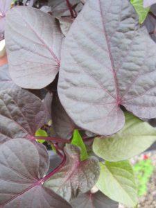 Blog Food 5.19.14-2 003