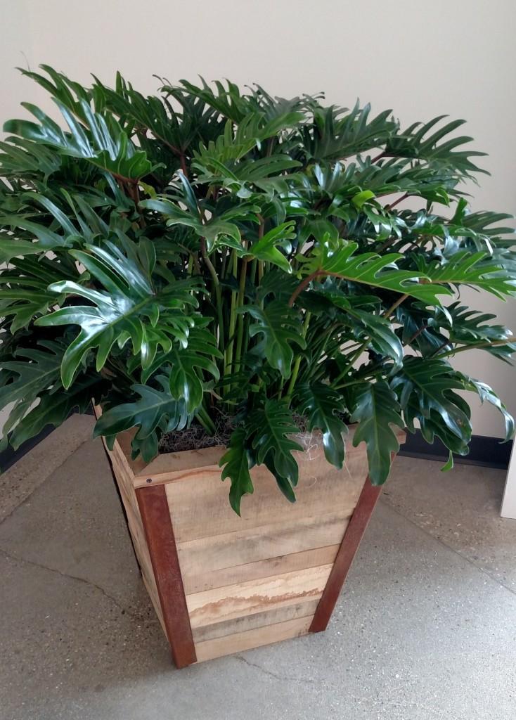 modern office plants. Pots2 Modern Office Plants E