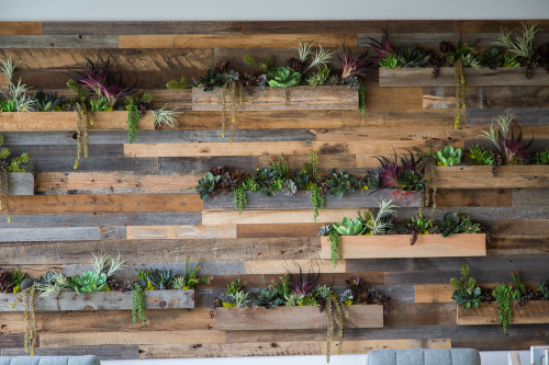 modern office plants. An Up-cycled Wood Wall Features Window-box Style Planters Of Succulents And Air Plants. The Modern Feel Office Surroundings Is Nicely Juxtaposed By Plants