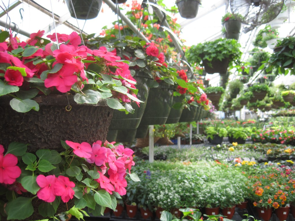 2018 Impatiens Double Tiered