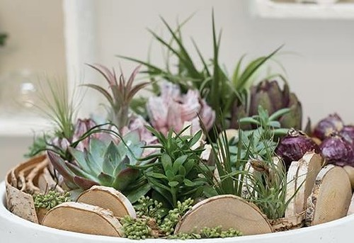 A container with a variety of succulent plants is perfect for the beginner. They love higher light but will tolerate bright indirect light. Watering is infrequent.